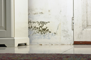 Mold testing and inspection services from Bangor's experts