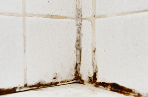 Black mold growth on tile grout